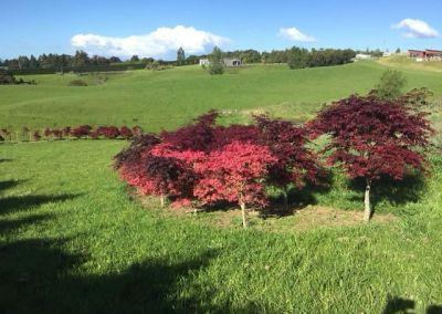 Tikara Country Gardens