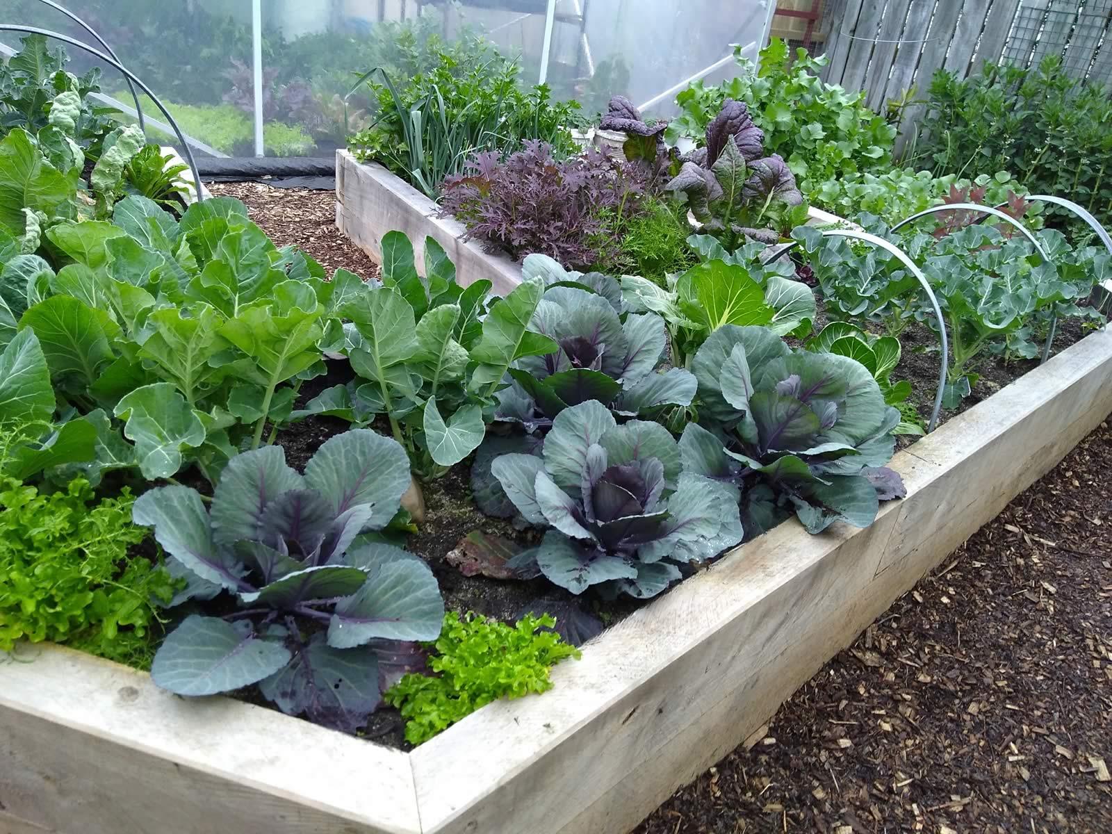 Garden For Life Wairarapa Garden Tour 162055854