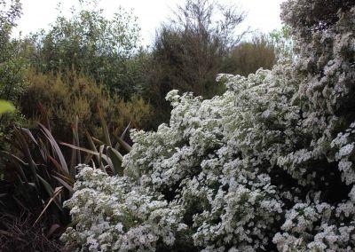 Native Tree Woodside Wairarapa Garden Tour 2018 1