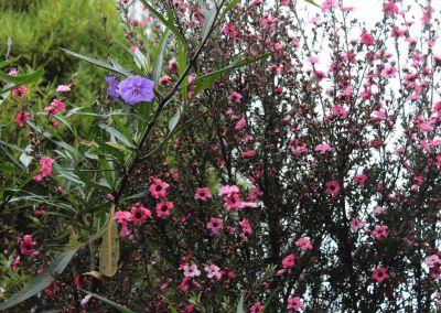 Native Tree Woodside Wairarapa Garden Tour 2018 2