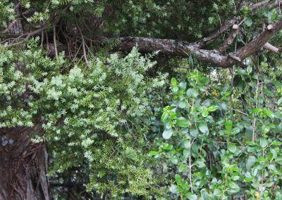 Native Tree Woodside Wairarapa Garden Tour 2018 6