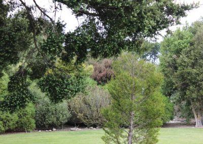 Native Tree Woodside Wairarapa Garden Tour 2018 7