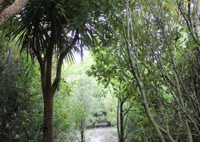 Native Tree Woodside Wairarapa Garden Tour 2018 9
