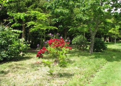 Woodland - Tarata