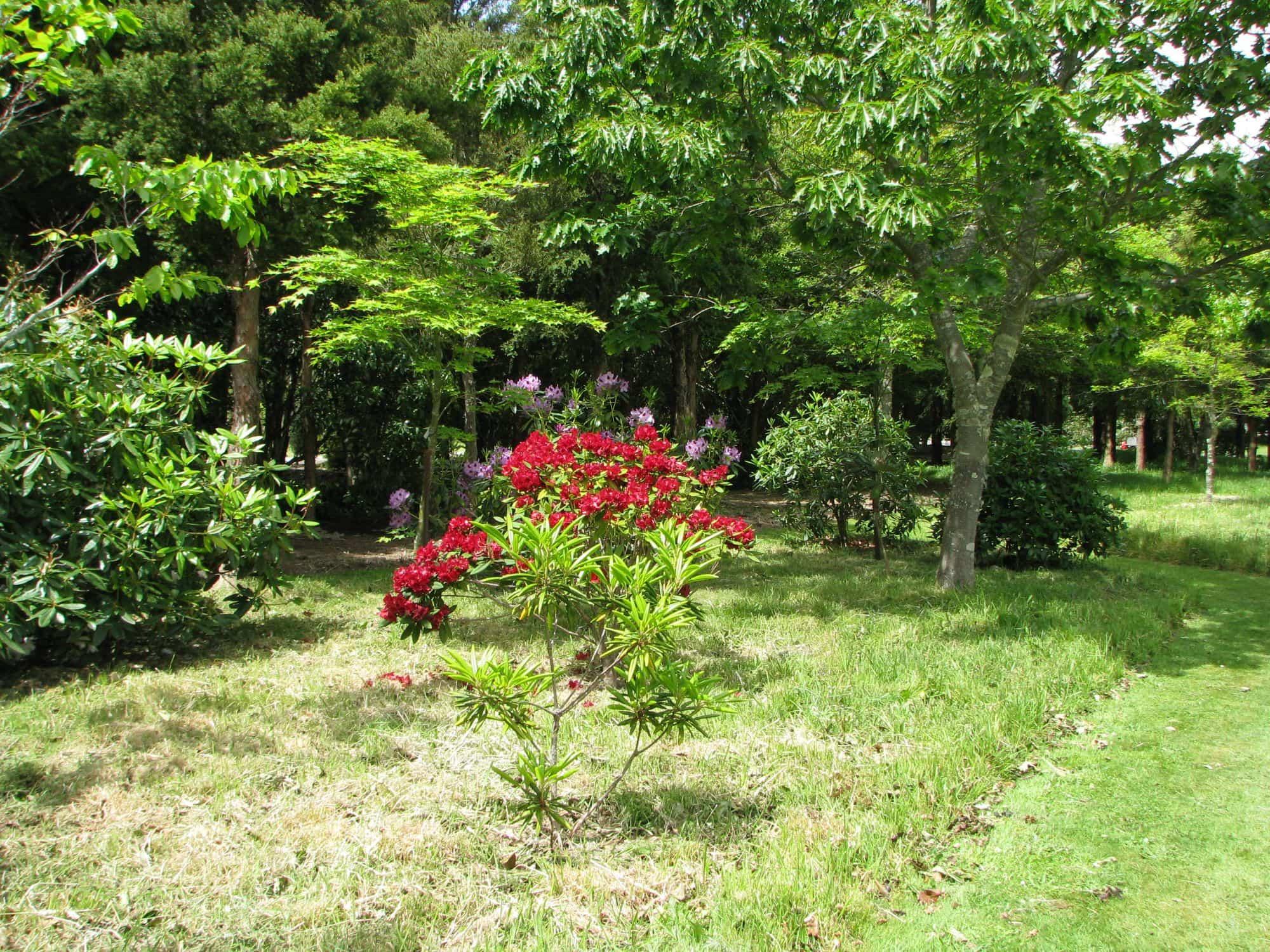 Tarata Wairarapa Garden Tour