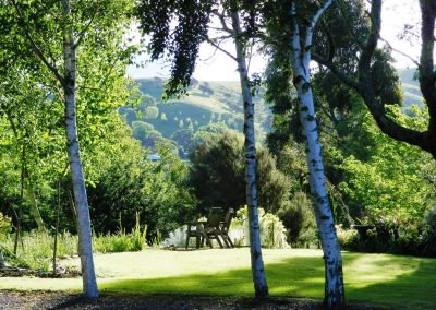 Silver Birch And Sitting Place