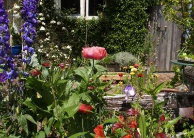 Albion Perennials