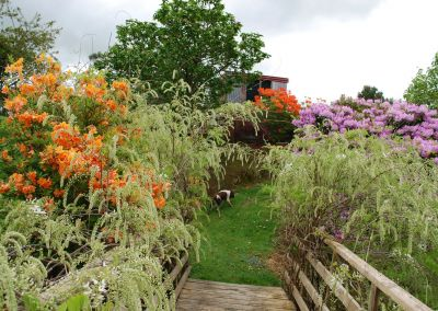 Braemore Farm Garden Tour 2019 Bridge Colour And Dog