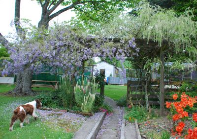 Braemore Farm Garden Tour 2019 Dog And Wisteria