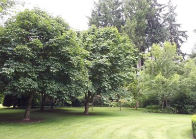 Evesham Trees And Lawns