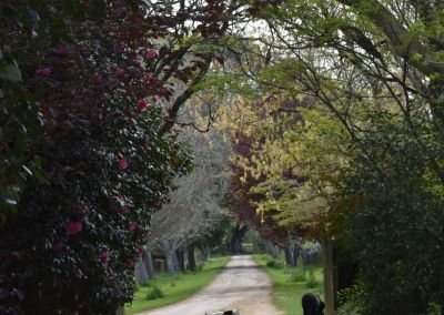 Lucy And Hoover Driveway Abbotsford Wairarapa Garden Tour 2019 2