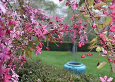 Pinky Blossom Blue Pot Abbotsford Wairarapa Garden Tour 2019 2
