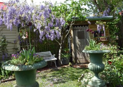 French Pots + Wisteria2