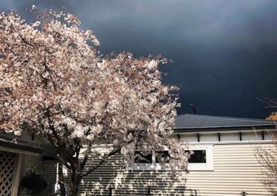 Cherry Tree Dark Sky