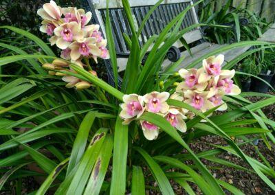 Orchid Web