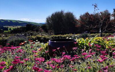 Tikara Country Gardens 2020