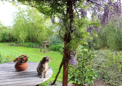 Cat And Wisteria Web