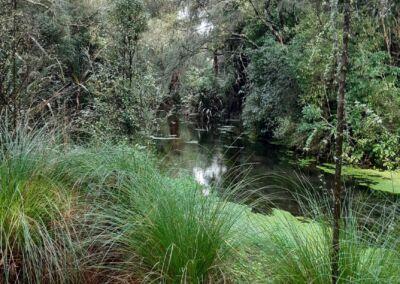 Restoring Waterway Web