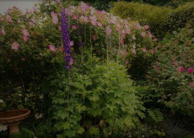 Complicata Blooms (2)