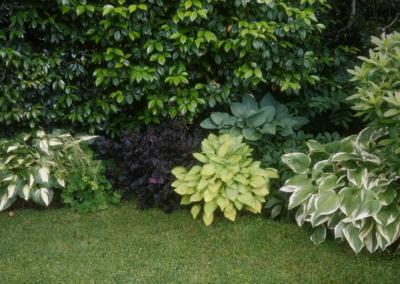 Hostas Frame The Garden (2)